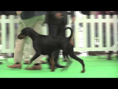WELKS Dog Show 2016 - Working group FULL