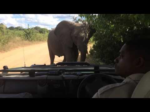 Safari in beautiful Botswana