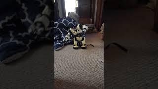awesome robot dance 2019