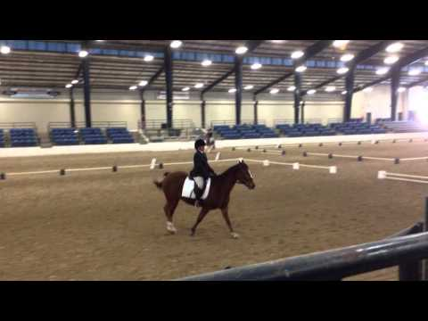 2015 USDF Intro B Epic Fail @ Snowbird Dressage