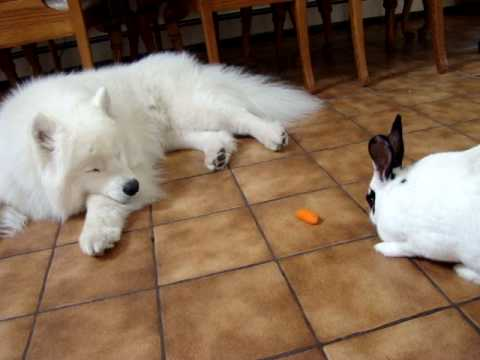 Pets & Animals ,Art & Entertainment,Business,Career & Finance,Esports,Lifestyle,Beauty, Hair, Make Up,Fashion,Health & Fitness,Home, Decor and Garden,Jewelry,Online Shooping,Real Estate,Start Up,Technology,Computer, Electronic & Gadget,Website, Hosting & Domain,Travel,vaccination in animals and pets,Pet show,Siberian Husky,Labrador Retriever,Samoyed,Golden Retriever,American Bobtail, Ringtail