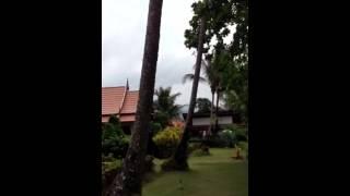 Тайланд, остров Ко Чанг, отель Paradise resort(Paradise resort Koh Chang., 2014-05-03T19:42:03.000Z)