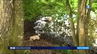 Yonne : un troupeau de moutons a été attaqué par des chiens
