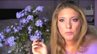 Tra fiori e piante - Il Plumbago. Thumbnail