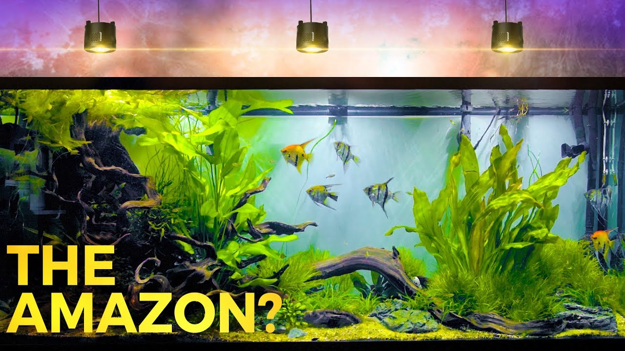 Enormous Amazon Inspired Aquascape Youtube