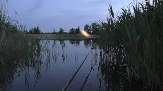 Кошка пришла на ночную рыбалку Рыбалка на удочку с секретной прикормкой Рыбалка 2021 0008