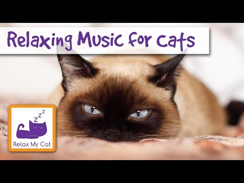 Relaxing Music for Cats – Helps your Cat Relax with Music