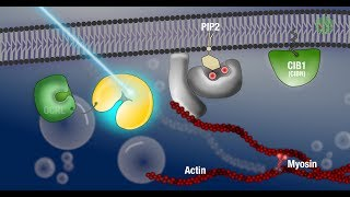 Applications of optogenetics at EMBL