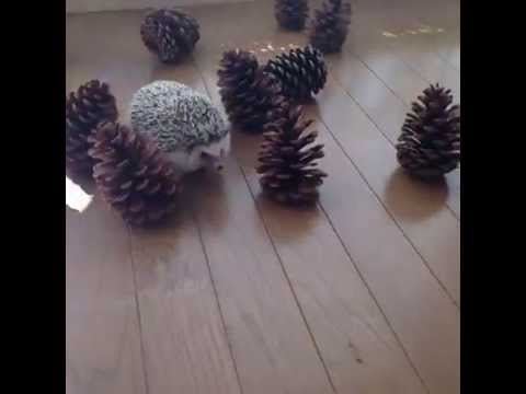 Toby and his pine cones  YouTube