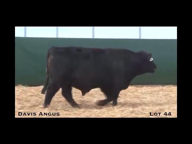 Davis Angus Lot 44