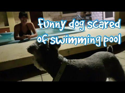Funny dog scared of swimming pool 愛犬、全力でプールを拒否!