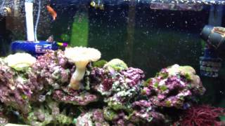 feeding 38 gallon reef tank