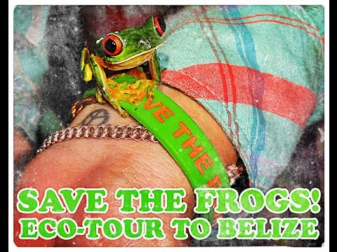 SAVE THE FROGS! in Belize: Ecology, Conservation, and Eco-tours