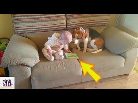 شك الاهل في تصرفات الكلب .. فوضع الأب كاميرا مراقبة .. و عندما فتح الفيديو شاهد ماذا وجد !!