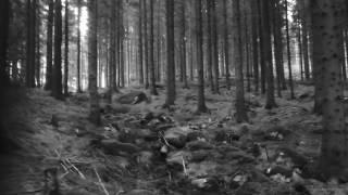 Deforestation - Deforestation (single)