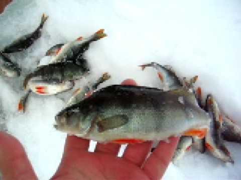 ловля рыбы на норот видео
