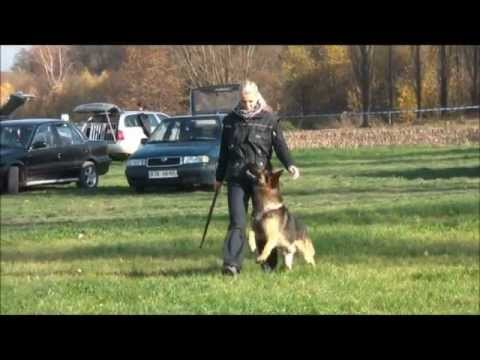 Taxi Vikar - obedience ( 10.-11.11.2012 - Dětmarovice )
