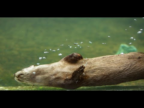 Otters At Play at MODS VR