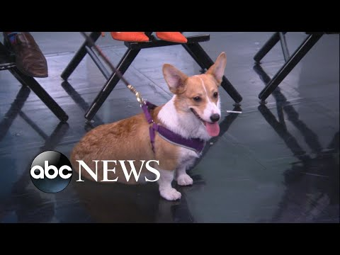 Download Youtube: How to avoid scams when adopting a puppy