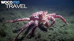 Die Krabbenfischer von Feuerland (360° - GEO Reportage)