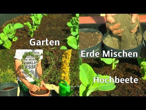 Erbsen im Hochbeet / Garten Lonicera Herz Schneiden Umtopfen / Hochbeete aktuell Gartenschlau TV