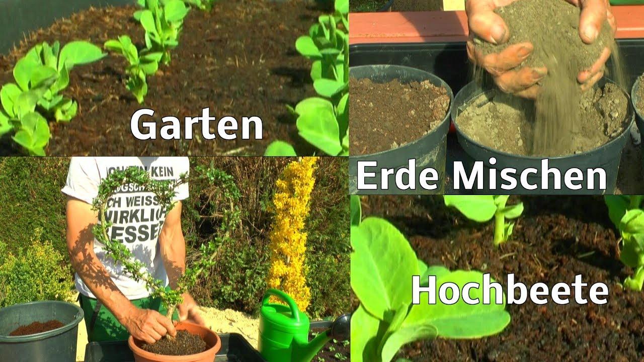 Erbsen Im Hochbeet Garten Lonicera Herz Schneiden Umtopfen