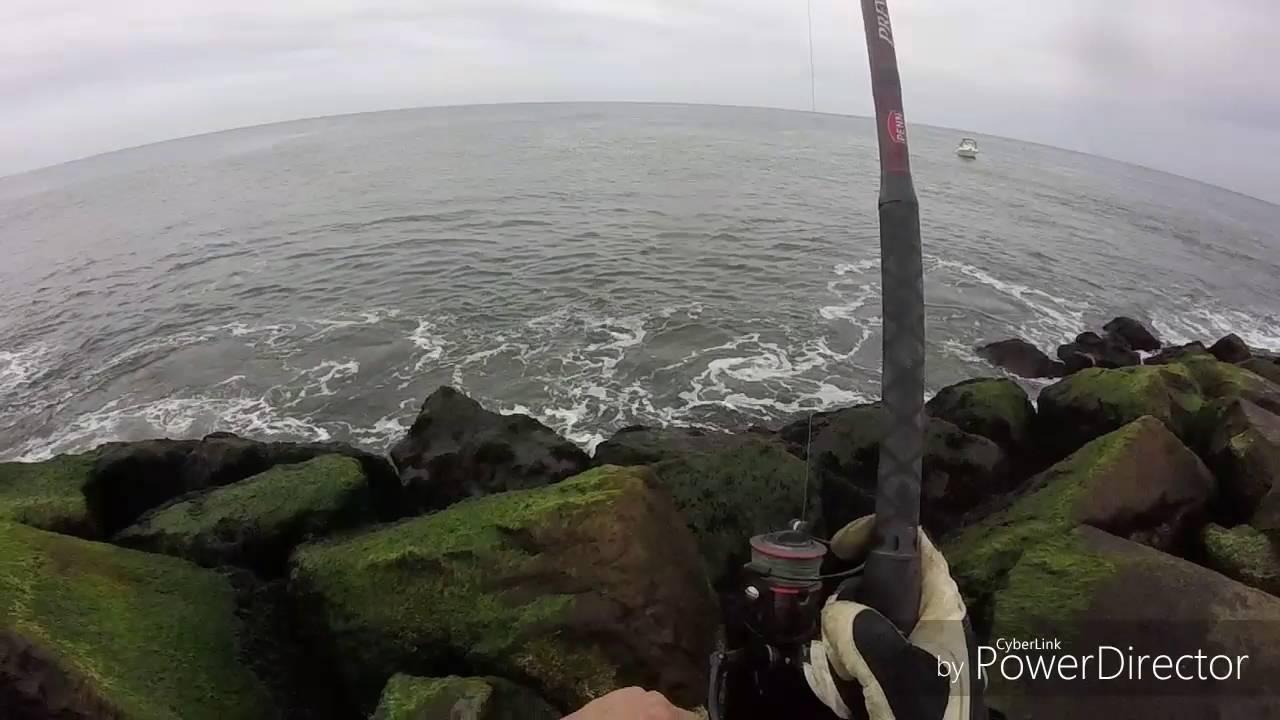 Bluefish Fishing At Island Beach State Park 5 9 16