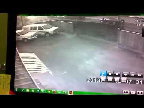 Rocco (Guard Dog) Chases Away Robbers
