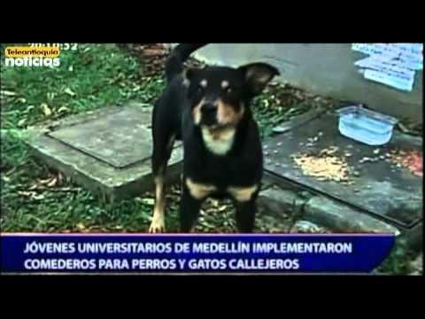 J venes universitarios de medell n implementaron comederos for Comederos para perros