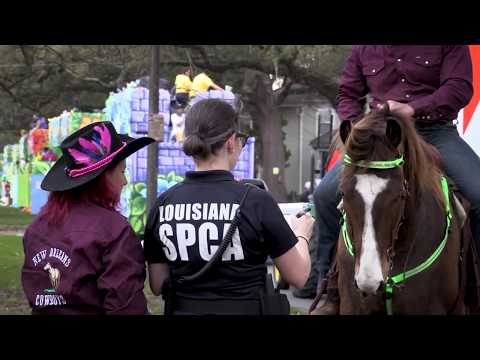 Latest News - New Orleans - Louisiana SPCA