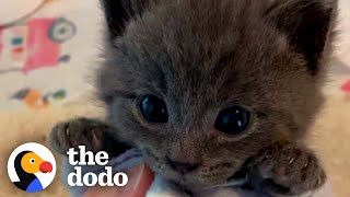 Picky Kitten Refuses To Give Up His Bottle | The Dodo Cat Crazy