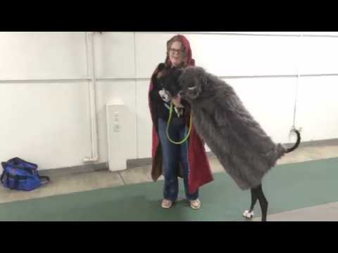 Circus School for dogs