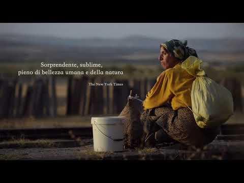 HONEYLAND (Official Trailer in italiano)