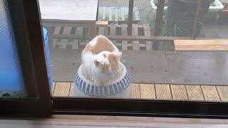 야채박스에서 태어난 고양이 이야기