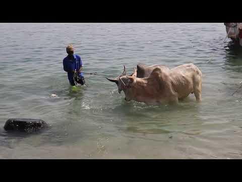 DentalTv: Les saltigués de Rufisque implorent Mame Coumba Lamb