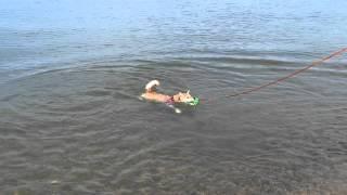 今日は、琵琶湖で水遊びしました♪ ここはワンちゃんOKで、向かいにはド...