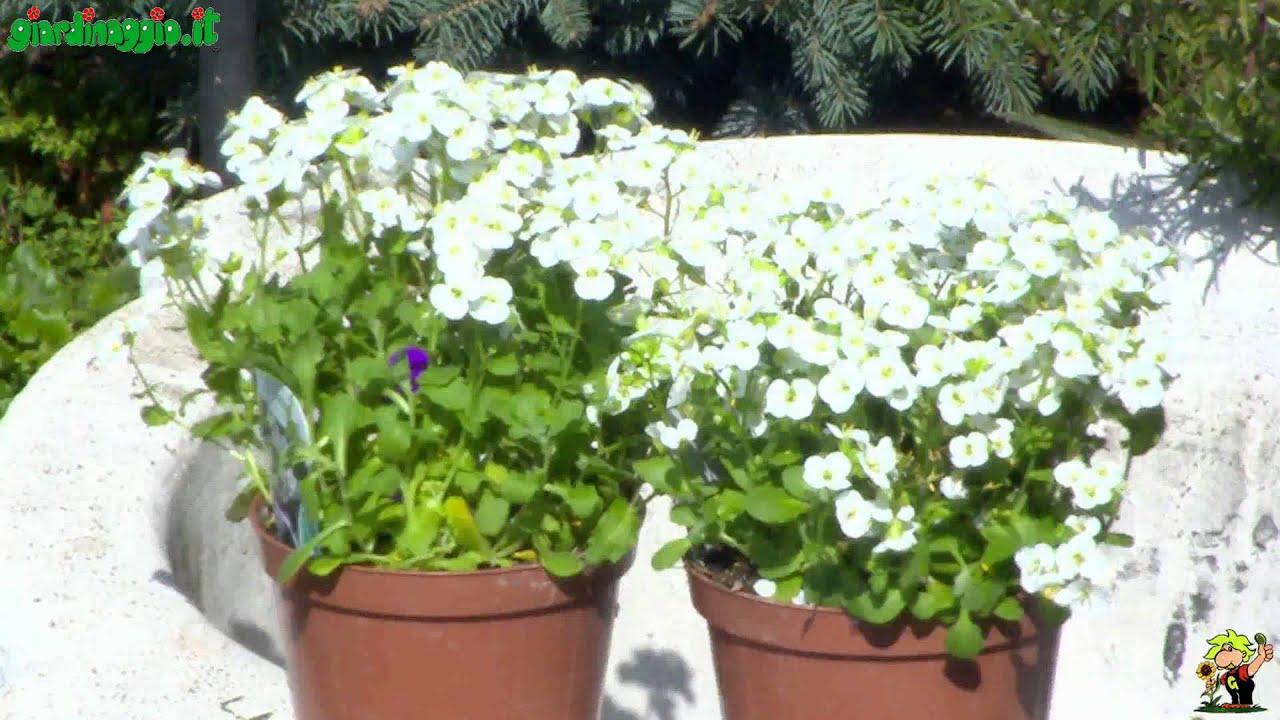 Fiori Tappezzanti Per Aiuole perenni per giardini rocciosi