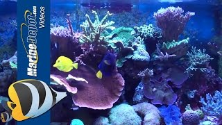 Marine Depot Featured Tank: Adnan's SPS Dominate 150 Gallon Reef