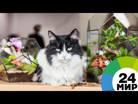Вопрос: Как предотвратить аллергию на кошек?