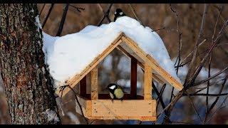 Как сделать кормушку для птиц  в конце смешное видео из школы