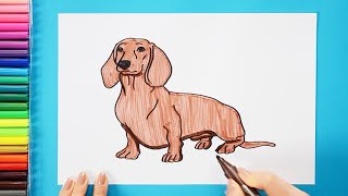 How to draw and color a Dachshund - how to make dogs series