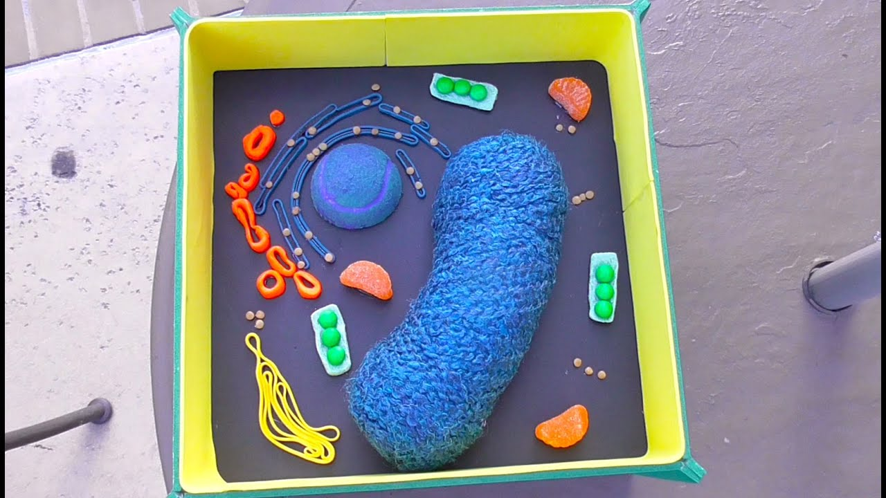 hight resolution of plant cell science project using household items