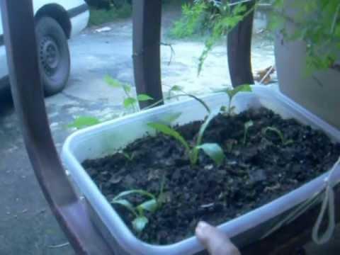 Indoor Gardening Grow Cantalopes