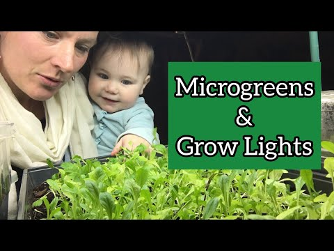 Microgreens with Grow Lights  | Front Porch Catholic | Vlog