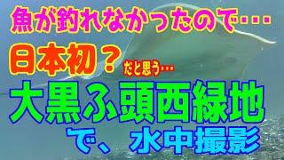 釣り動画ロマンを求めて 番外編(冬の海到来!日本初?大黒ふ頭西緑地で水中撮影)