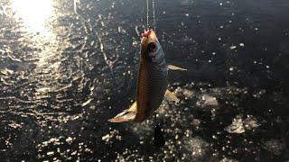 Зимняя рыбалка 2019 2020 Ловля плотвы на поплавочную удочку