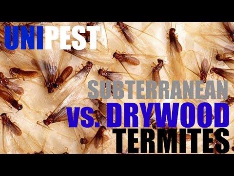 Subterranean vs.  Drywood Termite Control by Unipest - Santa Clarita Pest Control