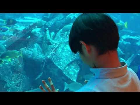 Dubai Lost Chamber Aquarium Atlantis   Jopee Our Bunsolit