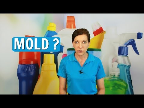 Mold How to Prevent Mold and Mildew