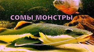 Огромный аквариум дома  Кормление рыб